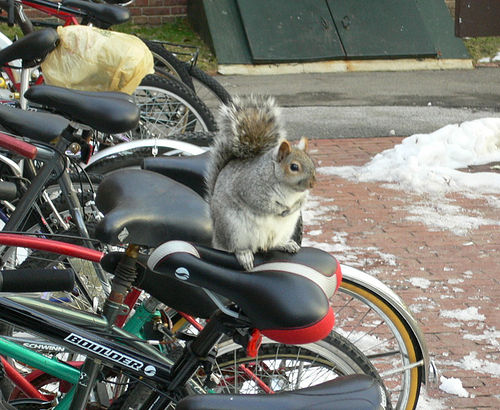 danger squirrels ahead league of american bicyclists